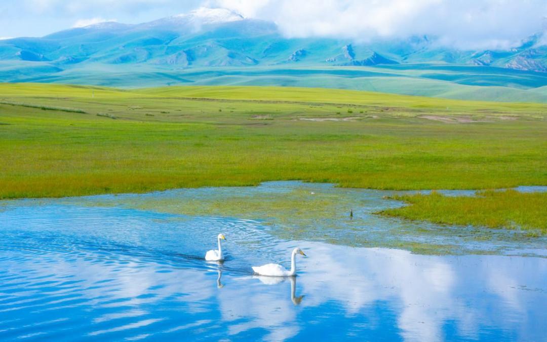 bayinbluk grassland