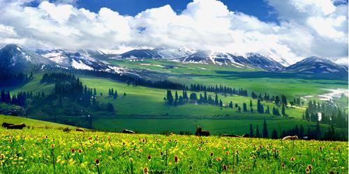 naraty-grassland-2.jpg