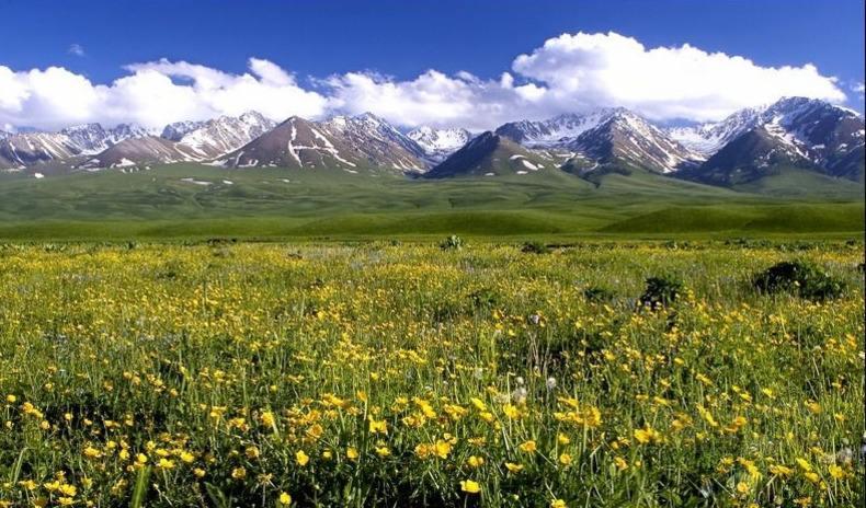 naraty-grassland-3.jpg