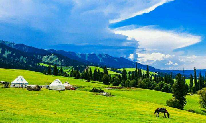 naraty-grassland.jpg