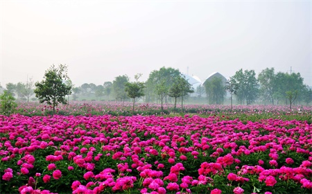 Best Time to Visit Luoyang