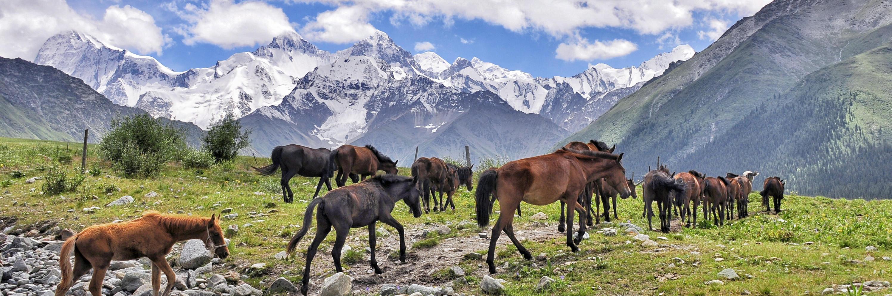 Silk Road Oriental Express