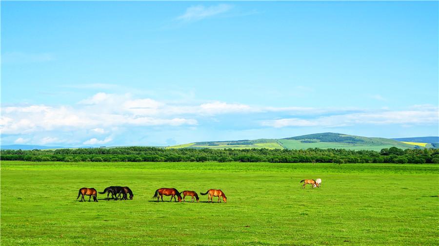 Hulunbuir Grassland.jpg