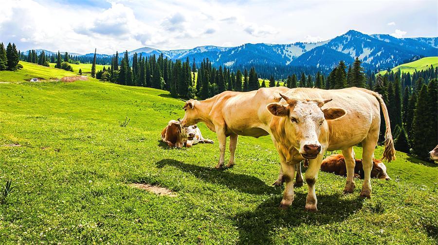 Naraty Grassland
