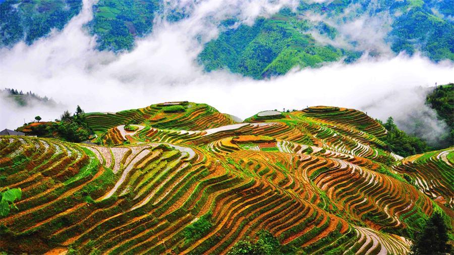 Pingan Village Housing Rice Terraces
