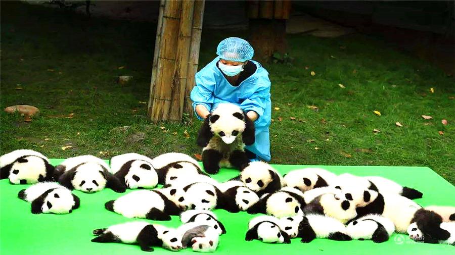 Giant Panda Base.jpg