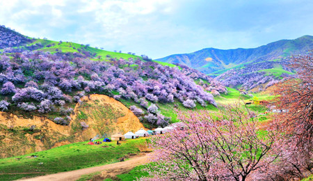 Silk Road Tour in Spring of March and April