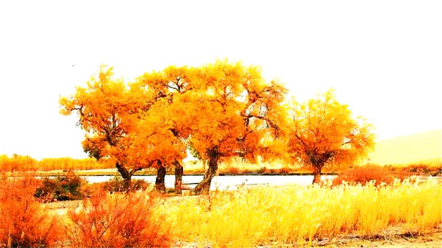 Poplars Diversifolia Park.jpg