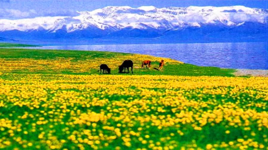 Xiata Grassland.jpg