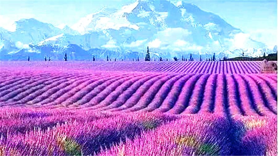 lavender-1.jpg