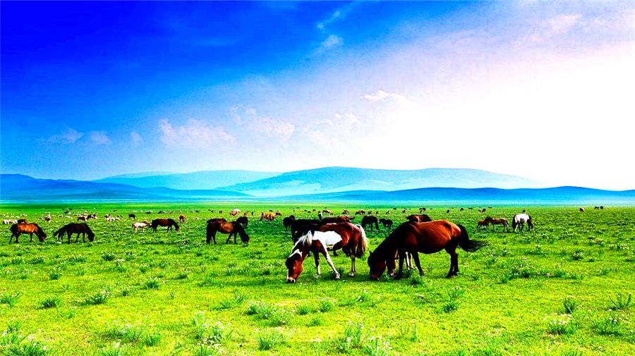 Shelamuren Grassland.jpg