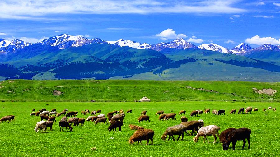 Narati Grassland .jpg
