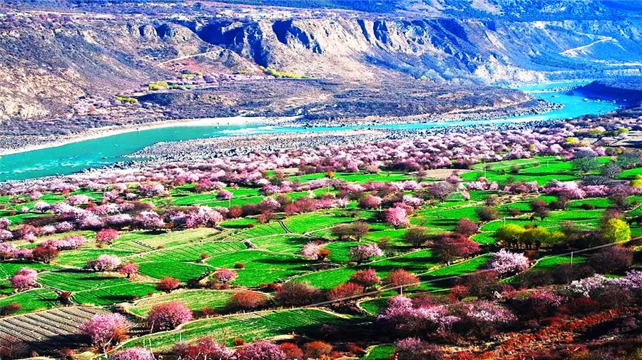 Apricot valley.jpg