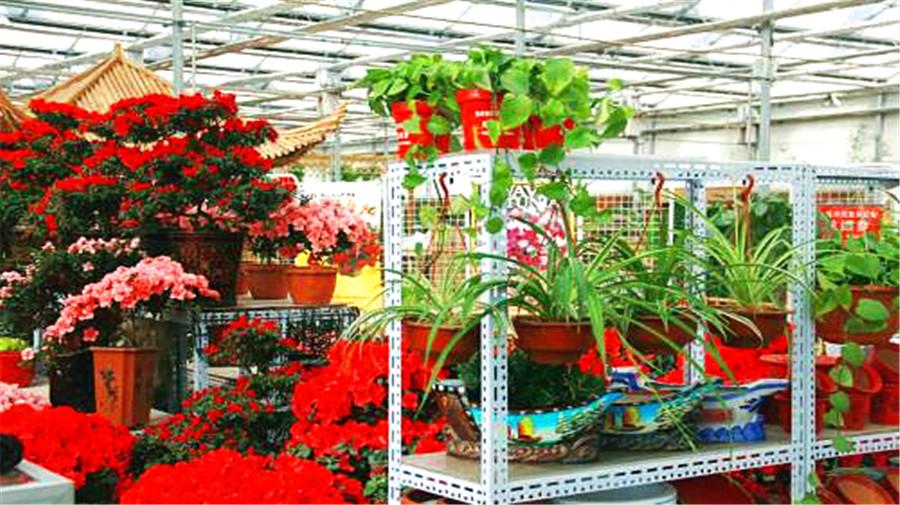 Bird Flower market.jpg