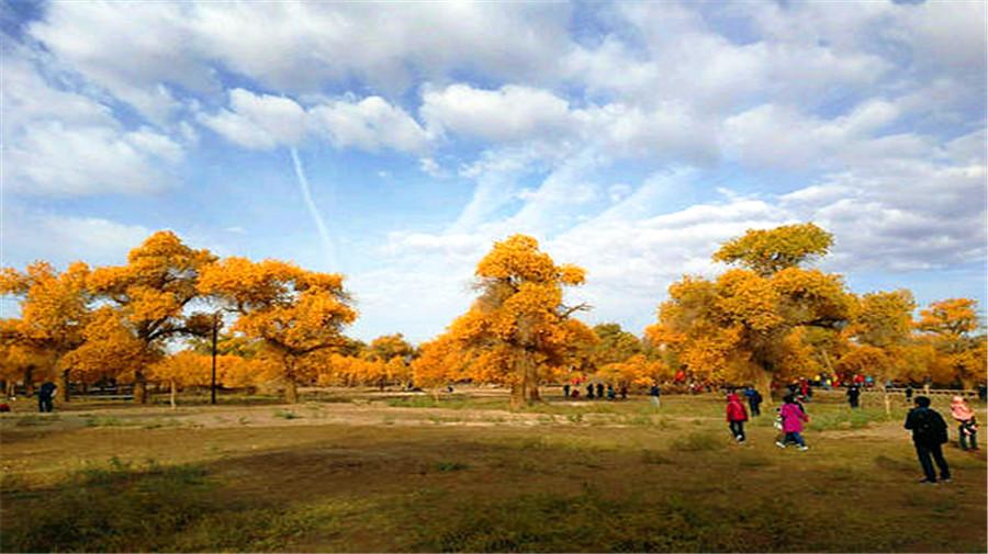 Jinta populus forest.jpg
