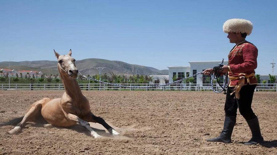 Akhal-teke-horses.jpg