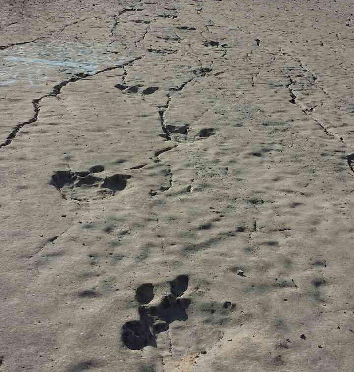 Plateau-of-dinosaurs.jpg