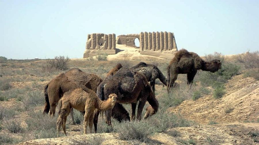 Ancient-city-of-merv.jpg