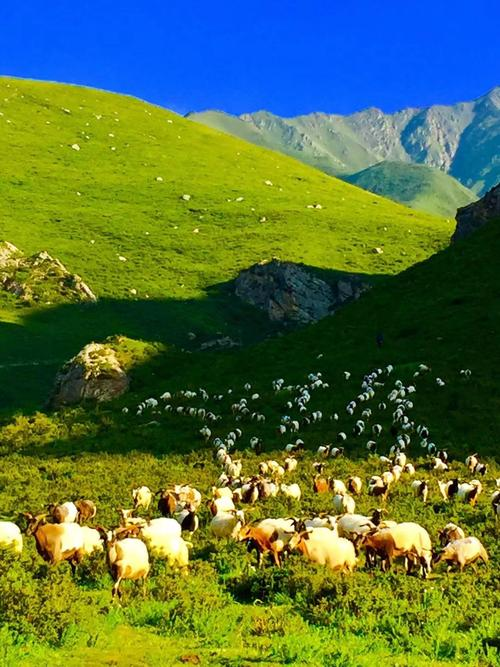 Ganjia-grassland1.jpg