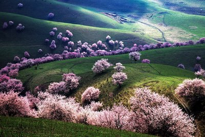 Apricot- Valley1 .jpg