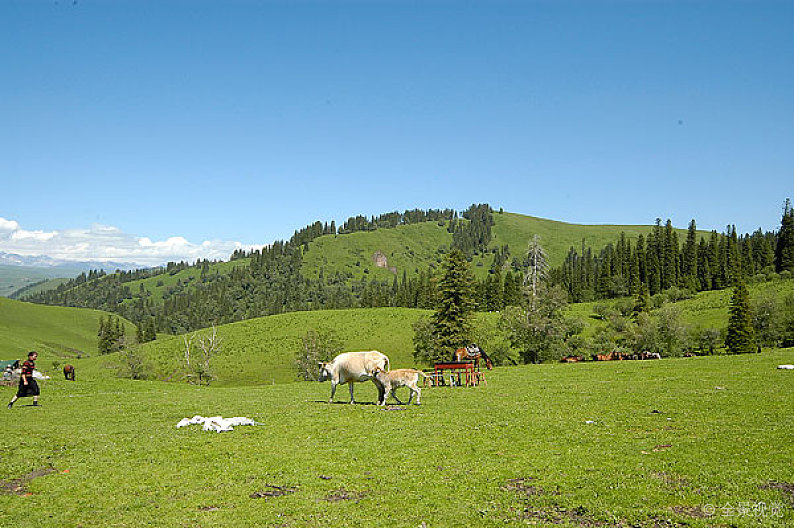 Naraty- Grassland.jpg