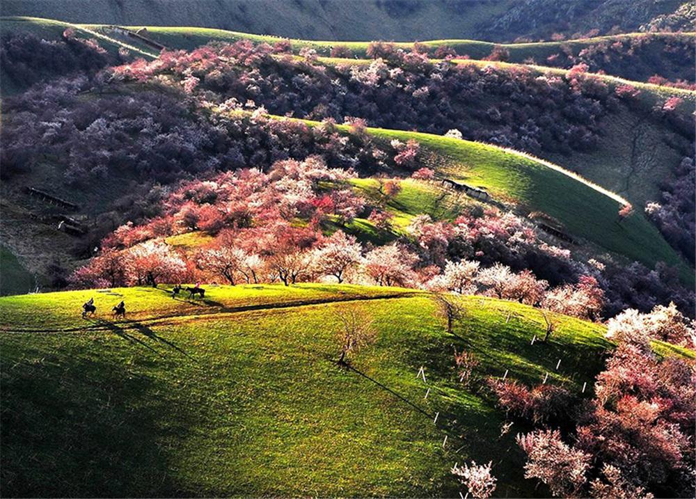Tuergen -apricot- Valley.jpg