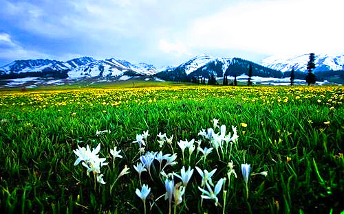7 Days Photography Tour in Xinjiang with Apricot Flowers